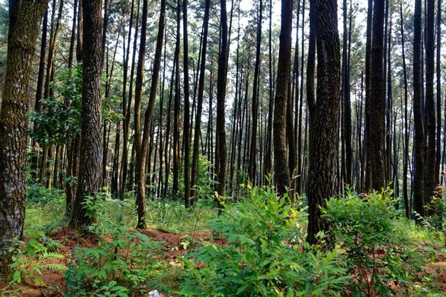 Environnement : l'Indonésie pleure ses forêts