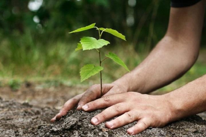 La plantation des arbres n'est pas suffisante pour sauver la planète